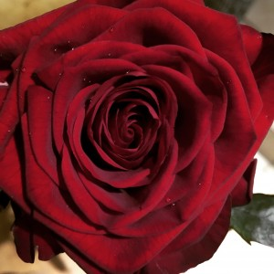 valentijn3